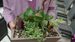 Terrys succulent winnings